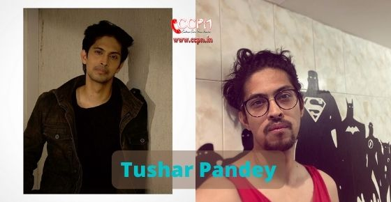 How to contact Tushar Pandey
